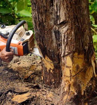tree cutting springfield