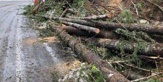 emergency tree care